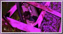 The Secret Garden [S.1.2] (EcstacyTinkerbell) Tags: sl secondlife firestorm firestormviewer 3d blogger photography thefairygoddess thefairygoddessblog powderpackprincess powderpack lelutka meshhead meshbody mesh bentobody bento bentohead art adult decor furniture decorate kkink sexy gacha rare windlightsettings windlight virtualworld avatar anime hentai games game mmog mmo mmorgp mooc blender model modelling multiplayer nature landscape meetandgreet online designers fashion animations hair travel portrait