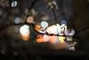 L1000061 (Zengame) Tags: leica leicasl leicasltyp601 sl summilux summiluxsl50mmf14asph cherryblossom japan sakura tokyo typ601 ズミルックス ズミルックスsl ライカ 日本 東京 桜 文京区 東京都 jp