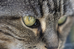 Pepper (Artrocity) Tags: artrocity macro nikkor 105mm outdoor spring eye catseye cc100