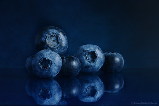 blueberries on blue 30/100x 2018