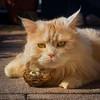 Breaking News ! (FocusPocus Photography) Tags: linus katze kater cat chat gato tier animal haustier pet nest eier eggs