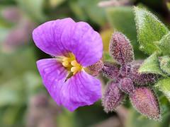 Blüte (stefan.urlbauer) Tags: blüte makro stacking