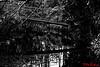 Bridge Johnston Gardens Aberdeen (red.richard) Tags: aberdeen park pond bridge bw monochrome