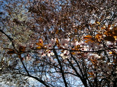 2018-04-03-13179 (vale 83) Tags: blossom friends coloursplosion colourartaward nokia n8