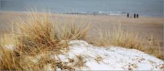 Dunes, plage et la mer du Nord, De Banjaard, Kamperland, Noord-Beveland, Zeelande, Nederland (claude lina) Tags: claudelina nederland hollande paysbas zeeland debanjaard plage dune merdunord noordzee zeelande oyat neige snow
