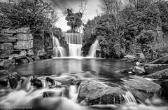 Penllergaer Falls 2 (Kenaz.24) Tags: waterfall blackandwhitewaterfall penllergaerfalls silverefexpro2