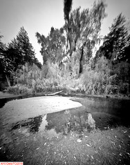 The sandy pond (DelioTO) Tags: 4x5 blackwhite botanical canada d23 f175 fall fomapan100 landscape ontario pinhole rural winter