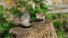 LR7-PGH55399 (JB89100) Tags: 2018 6kphotomode effetsspeciaux moineau oiseaux quoi
