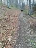 Weg nach oben (shortscale) Tags: wald weg trampelpfad hund bruno labrador schwäbischealb buche laub