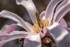 Flower Power,......... (@FTW FoToWillem) Tags: lente bloesem blossom flower bloem nature natuur jaargetijde seizoen spring springtime macro bokeh nederland netherlands holland hollanda gorinchem ftw fotowillem willemvernooy 105mm