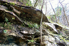 bigsouthfork_3826 (jcbonbon) Tags: april big south fork tennessee park spring waterfall