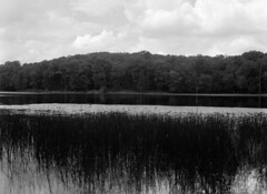 Cash Lake (Ian David Blüm) Tags: cash lake patuxent research refuge marsh swamp forest reeds wildlife ilford delta pro 120 medium format negative bw film mamiya 645 protl