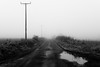 Foggy Road (Barry Carr) Tags: minimalism blackandwhite monochrome scotland landscape montrose mist angus fuji35mmf2 bw fujixt20 fujinon35mmf2 mono