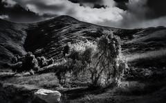 Pomona Tree (mcook1517) Tags: monochrome blackandwhite bw clouds landscape trees rock hills contrast travel california hillside