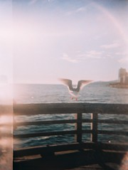 CrossBird_Holga_JW (joannewhiteart) Tags: crossbird holga holga120s crossbird200 rollei crossprocess slidefilm colourtransparency ilovemyholga beautifulfilm ishootfilm ilovefilm vancouver westvancouver ambleside