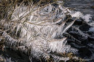 2018-03 Echt ijskoud met aanvriezende oevers bij Stad aan 't Haringvliet/NL