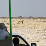 On the game drive thumbnail