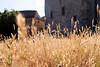 Un'estate (raffaella.rinaldi) Tags: summer harvest wheat sunny nature countryside houses yellow italy