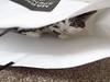 Cat in bag (Pat's_photos) Tags: pet cat bag 7dwf