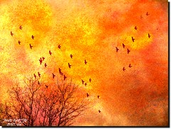 BIRDS AND CLOUDS (jawadn_99) Tags: afternoon windowshoping seurat fall pic colorful interrestingness ampqua usa america whitehouse cafe river sutherlin oregon food center impretionism tranquil quiet calm sober static peaceful reflections clouds fantasy abstract colors red blue winter scout flowers art photgraphy representationalart digital modern contemporary expression computer design morphine explore