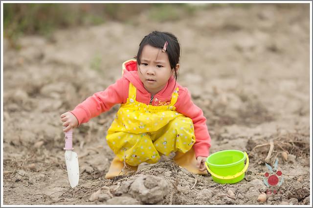 火龍果園星光野餐Ⅱ 找地瓜 烤地瓜 吃地瓜 (11)