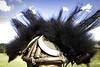 CRW_1034_RT8 (annieleroy479) Tags: détail coiffe danseur