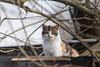 Cat (Jevgenijs Slihto) Tags: sigma150600 d5600 cat kitten cute animal eyes homelesscat white orange black brown rooftop pet outdoor katze gato