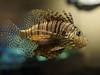 South Carolina Aquarium - Lionfish (Joey Hinton) Tags: charleston south carolina aquarium olympus omd em1 mft m43 microfourthirds 45mm f18 fish lionfish