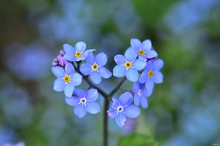 Today's find.. heart shaped forget-me-not!