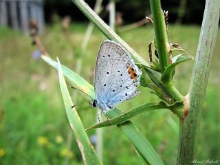 Butterfly 1646