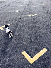 Boundaries (Rob₊Lee) Tags: gary lines black white yellow pet dog parking contrast minimal minimalism minimalist lot space spaces