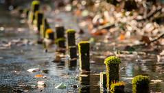 keep it green (Danyel B. Photography) Tags: frozen ground lake sea river water wooden stock flocks moss green sapling nature stream bokeh wood canon fd 70 210 f4