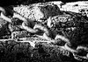 chain (colskiguitar) Tags: rust rusty cogs machinery steampunk covebay seascape waves tidal aberdeen aberdeenshire northeast scenery beautifulscotland scottishlandscape scottishphotography monochrome bnw blackandwhite drama coastline coast fishing canoneos80d canon400mm teeth derelict abandoned passageoftime