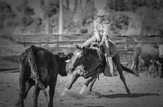 20090905_7001 (dc2photo) Tags: ncha ocha cow cutting cuttinghorse equine horse sport western