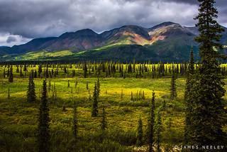 Alaskan Sweep