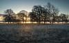 The Brecks - sunrise (Rod Martins) Tags: frost landscapes mist thebrecks clouds fog serene sky suffolk sun sunrise tranquility trees warm warming