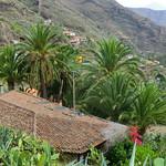 La Gomera (Spain's Canary Islands) -  palm grove @ La Laja thumbnail