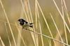 hirondelle (frederic.laroche6) Tags: hirondelle marais camargue provence oiseau bird animalier nikon