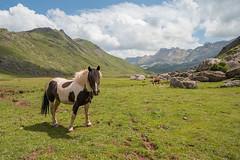 Freedom... (Giacomo della Sera) Tags: landscape paisaje caballo horse montaña verde green azul blue cielo sky textura texture light luz fotografia photography