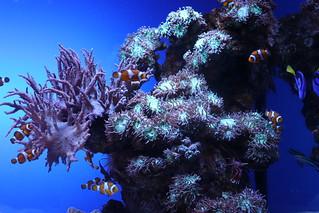 Aquarium - Palma de Mallorca, Espana