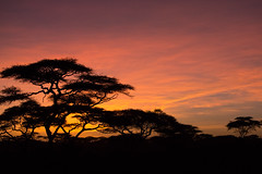 Good morning Tanzanian style! (Ring a Ding Ding) Tags: africa ndutu nomad serengeti tanzania nature safari sky sunrise coth coth5 naturethroughthelens