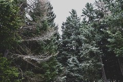 Nature (pinkspider101) Tags: ponte di legno pontedilegno picture mountein nature like italy snow white old christmas