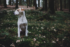 adventure day   l   part 2   l  2018 (weddelbrooklyn) Tags: natur wald mönkloh 35mm nikon blatt blätter leaf leaves green grün woods animal animals dog dogs pet pets