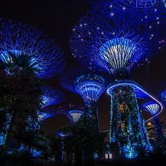 Gardens by the Bay, Singapore (volker.meier) Tags: lights night gardensbythebay singapore