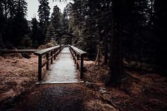Brücke in den Wald (Gruenewiese86) Tags: fuji harz hütte wald waldlandschaft waldlandschaften natur xe1 braunlage landschaft wandern wälder waldboden sonne orange teal holz baum pfad felsen tier