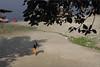 ghat, gokul (nevil zaveri (thank U for 15M views:)) Tags: zaveri people uttarpradesh up india gokul photography photographer images photos blog stockimages photograph photographs nevil nevilzaveri stock photo vrajbhoomi sunlight sunlit shadows ghat trees tree pilgrim holy yamuna river water boat vehicles