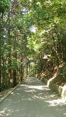 Castle trail (west) (Hazbones) Tags: samurai sengokujidai iwakuni yamaguchi yokoyama castle kikkawa suo chugoku mori honmaru ninomaru demaru wall armor spear teppo gun matchlock map ropeway