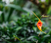untitled-24 (SnailsPlace) Tags: snailsplacesingapore2018 snailsplace singapore fujifilm fujifilmxt2 xt2 mitakon mitakon35mmf095 gardensbythebay flowerdome cloudforest supertrees flowers trees green bokeh bokehlicious selectivefocus