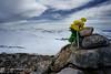 Omaggio all'alpe (EmozionInUnClick - l'Avventuriero photographer) Tags: parconaturaleduchessa fiori montetorricella vetta sonya7riii