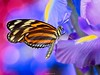 Butterfly and all the colors around (al.scuderi71) Tags: butterflies butterfly farfalle farfalla bokeh panasonic gh4 on1photoraw2018 on1 on1pics lumixmasters lumix on1photo flowers fiori lilla viola violet yellow giallo photo raw